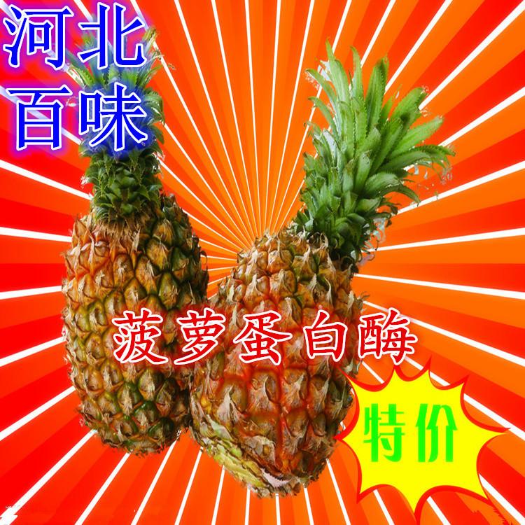 厂家直供天然菠萝蛋白酶