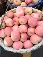山东优质红富士苹果/色泽好口感脆