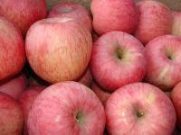 优质红富士苹果75以上批发便宜