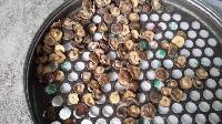 食用菌(香菇、茶树菇)