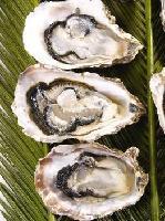 牡蠣提取物 牡蠣粉 牡蠣多肽
