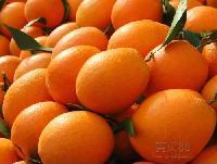 湖南新宁今年的脐橙 看 吃