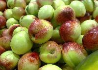 油桃今日价格