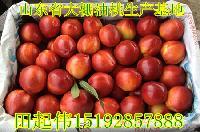 大棚油桃批发价格