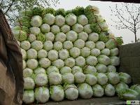 山东白菜供应价格