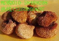 北京野生猴頭菇專賣 精美禮盒