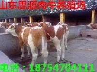养公奶牛和肉牛哪个好