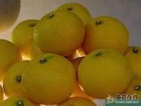 我家花果山桔柚10斤/箱