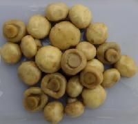 腌制雙孢菇
