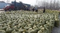 *现摘手摘山东冬枣 水果市场尤为火爆