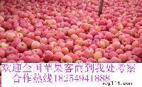 优质红富士苹果价格