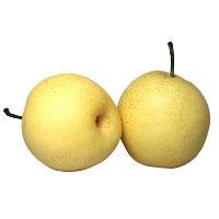 黃金梨批發