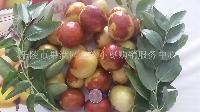 山东鲜红枣
