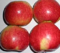 美八苹果价格美八苹果产地 价格