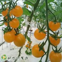 绿宫坊特色西红柿