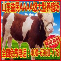 西门塔尔牛犊价格行情