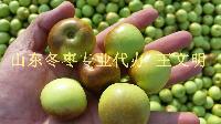 纯天然山东冬枣批发市场