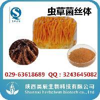 虫草菌丝体厂家现货供应虫草菌丝体原料