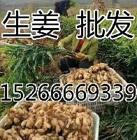 鮮姜批發價格