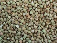 25KGS 牛皮袋包装榆林荞麦米