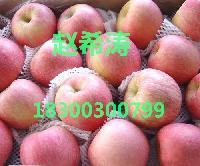 优质红富士苹果批发价格走势