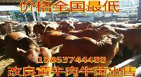 肉牛养殖基地