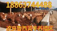 肉牛什么样的品种好