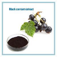 固体饮料 水果粉 黑加仑提取物