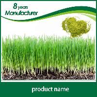 旭煌生物 厂家直销  纯天然无添加麦苗粉
