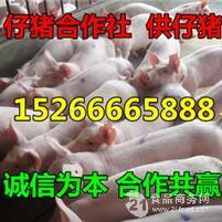 山东树利猪场仔猪便宜了