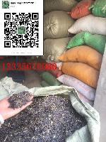 板蓝根种子价格