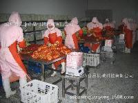 定做韩国泡菜生产线、泡菜加工设备