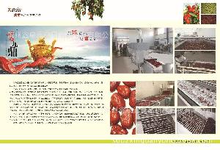 专业定做大枣加工生产线、红枣清洗烘干生产