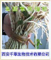 鱼腥草提取物 药食同源 西安千草厂家生产 纯天然 1公斤起售