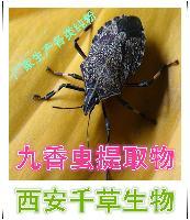 九香蟲提取物 【西安千草】廠家生產定制濃縮浸膏