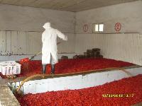 大量供应(出口)辣椒系列产品(图)