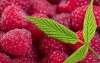 树莓粉  树莓浓缩粉