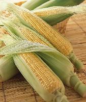 玉米纤维粉厂家
