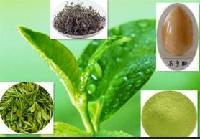 茶多酚提取物