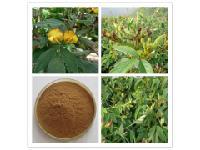 優質木豆葉提取物 木豆黃酮 廠家直銷