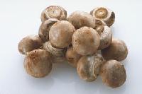 香菇多糖 60%含量  1公斤起订