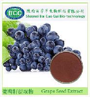 厂家直销葡萄籽提取物 原花青素 95% 花青素