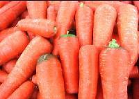 红萝卜籽粉