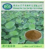 荷叶提取物 利尿 排毒减肥荷叶碱厂家低价供应