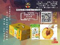 出口日本品质黄桃罐头,铁罐8听425克精包装