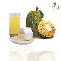 现货供应 菠萝蜜果粉  菠萝蜜 质量保证 免费取样