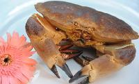 鮮活面包蟹 進口海鮮批發 全國配送