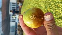 大梨枣产地供应商