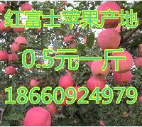 山東紅富士蘋果產地在哪 冰糖心紅富士蘋果產地