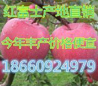 美八苹果种植基地